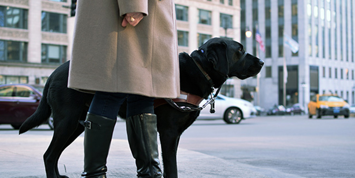 Uber-and-Guide-Dogs-2016