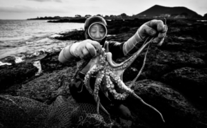 Photo of a woman diver holding an octopus.