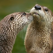 Photo of river otters that links to Regan's blog.
