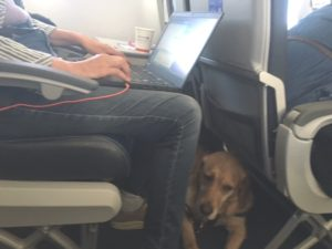 Picture of Whitney lying at Beth's feet on the plane.